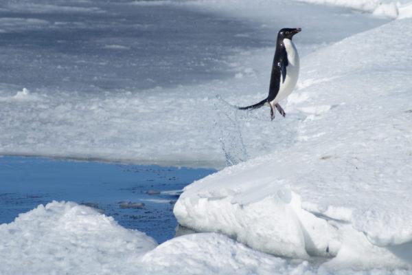 Colloque - La Recherche Scientifique en Antarctique : pourquoi, comment ?