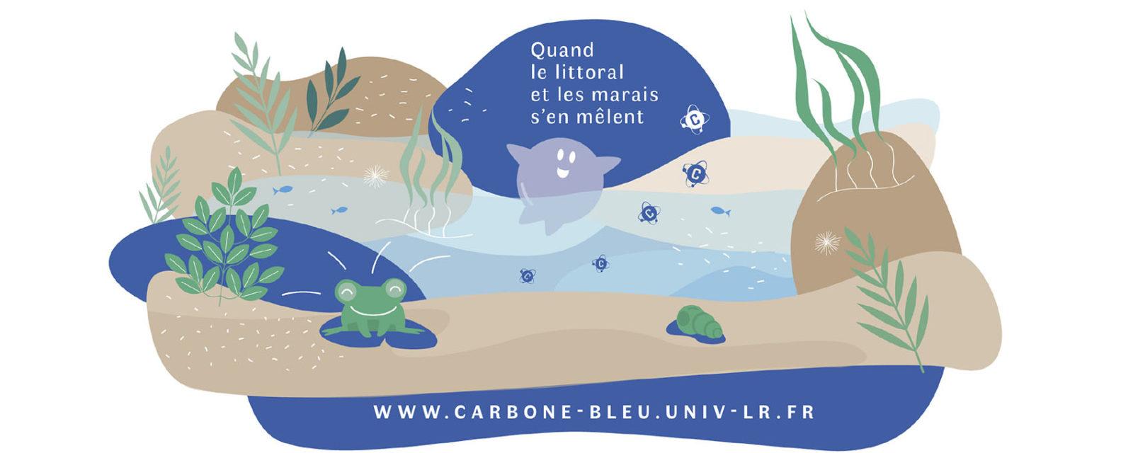 Carbone bleu, quand le littoral et les marais s'en mêlent 1