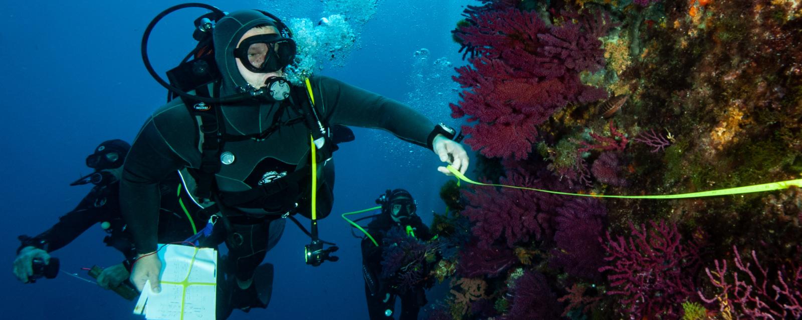 Du XV de France à la protection des fonds marins en Méditerranée, itinéraire d'un amoureux de la mer 3