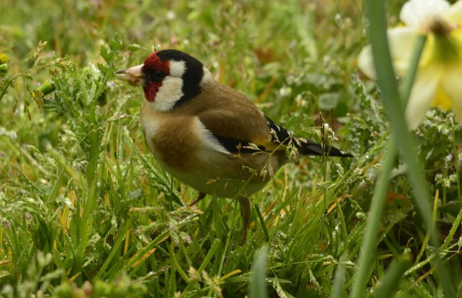 Les oiseaux à l'université de La Rochelle